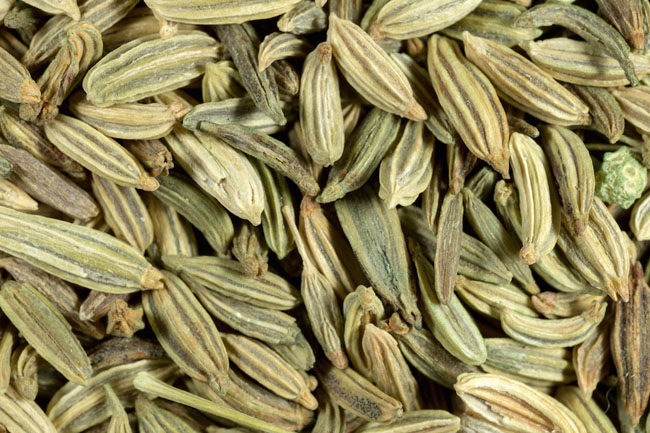 Dried fennel seeds seen close-up. The seeds are used in cookery and in treating stomach ailments.