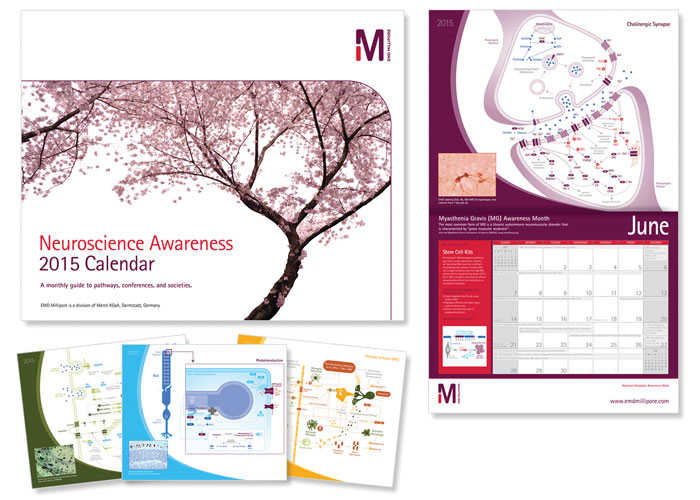 Neuroscience Awareness 2015 Calendar by EMD Millipore