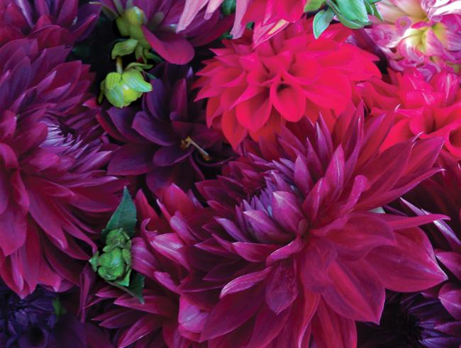 FLORA-1-floral-open