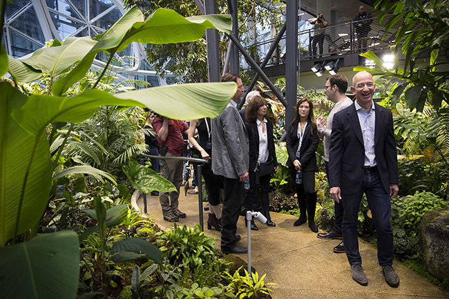 Jeff Bezos laughs while touring the Amazon Spheres on Monday, January 29, 2018, during the spheres grand opening in Seattle. KUOW Photo/Megan Farmer