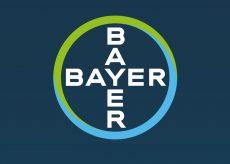 BAYERHEAD