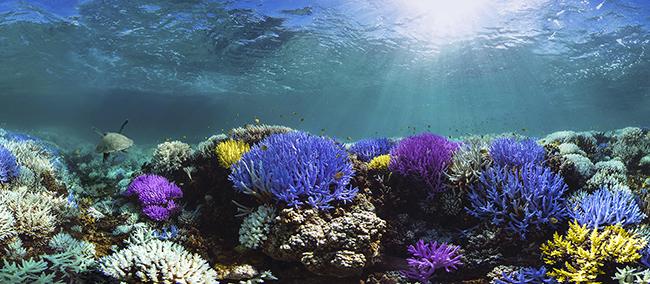underwater, water, ocean, reef, nature, ecosystem, wildlife, natural, sea, environment, sea, tropical, scuba, diving, saltwater